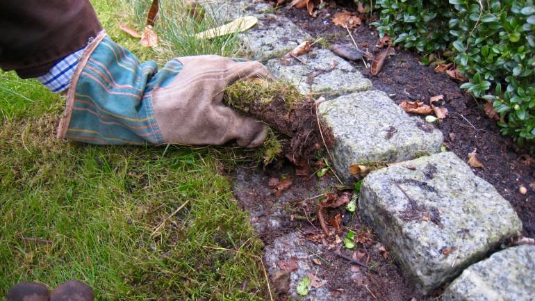 Die gestutzte Rasenkante sieht im Frühjahr klasse aus