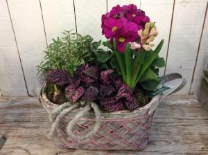 Der Frühling zieht gerade ein in die Garten-Center und Discounter