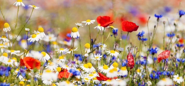 Welche Wildblumen sich ansiedeln, hängt von der Beschaffenheit Deines Bodens ab