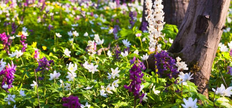 Jede Blumenwiese sieht anders aus. Eines haben sie aber gemeinsam: Sie tragen zum Naturschutz bei