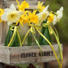 Narzissen - Osterglocken - Frühling - Flaschen - Franks kleiner Garten