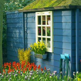 Narzissen - Osterglocken - Frühling - Gartenhaus - Franks kleiner Garten