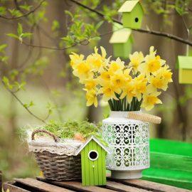 Narzissen - Osterglocken - Frühling - Franks kleiner Garten