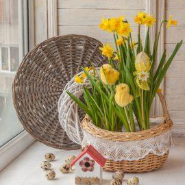 Narzissen - Osterglocken - Frühling - Osterdeko - Franks kleiner Garten