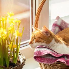 Narzissen - Osterglocken - Katzen - Franks kleiner Garten