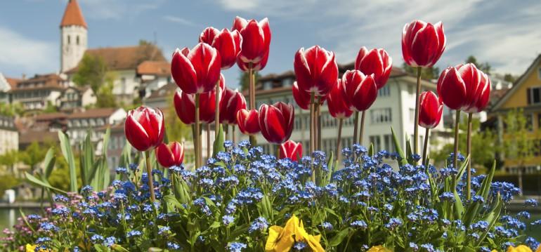 Vorsicht: leider ist diese Blumenschönheit giftig. Wer Haustiere hat, die gerne im garten buddeln, sollte aufpassen