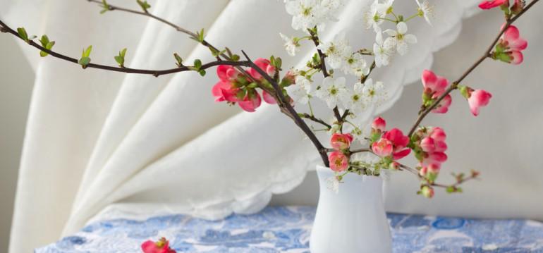 Zierquitte - Chaenomeles - Vase - Frühling - Franks kleiner Garten