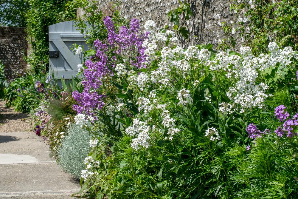 Cottage garten pflanzen  WIE HERRLICH! EIN COTTAGE-GARTEN - Willkommen in Franks kleinem Garten