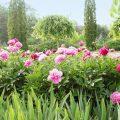 Pflanzenschutz - Rosen - Garten - Frühjahr - Mai - Franks kleiner Garten