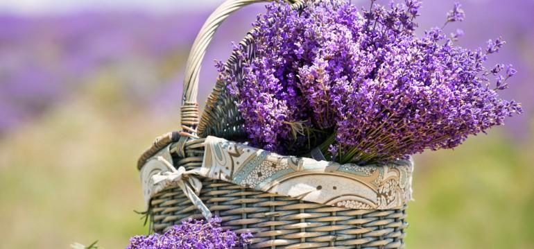 Lavendel 5 Ideen Damit Du Den Sommer Nicht Vergisst Willkommen In Franks Kleinem Garten