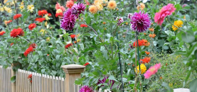 Februar - Vorfreude - Frühling – Dahlien - Gartenzaun - Franks kleiner Garten