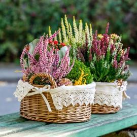 Heide - Körbchen mit Spitze - Tischdecke - Franks kleiner Garten