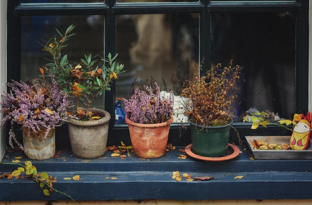 Heide - Fensterdeko - Franks kleiner Garten