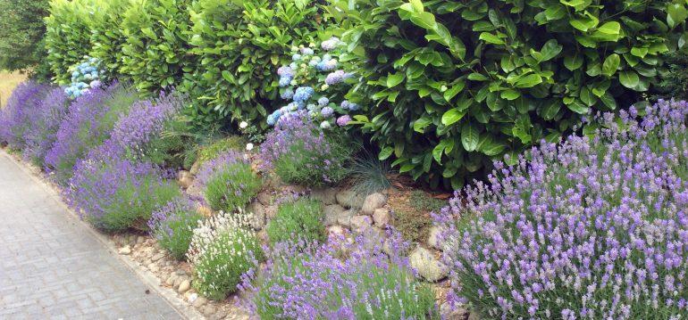 Die Schonste Hecke Fur Deinen Garten 10 Tolle Vorschlage Willkommen In Franks Kleinem Garten