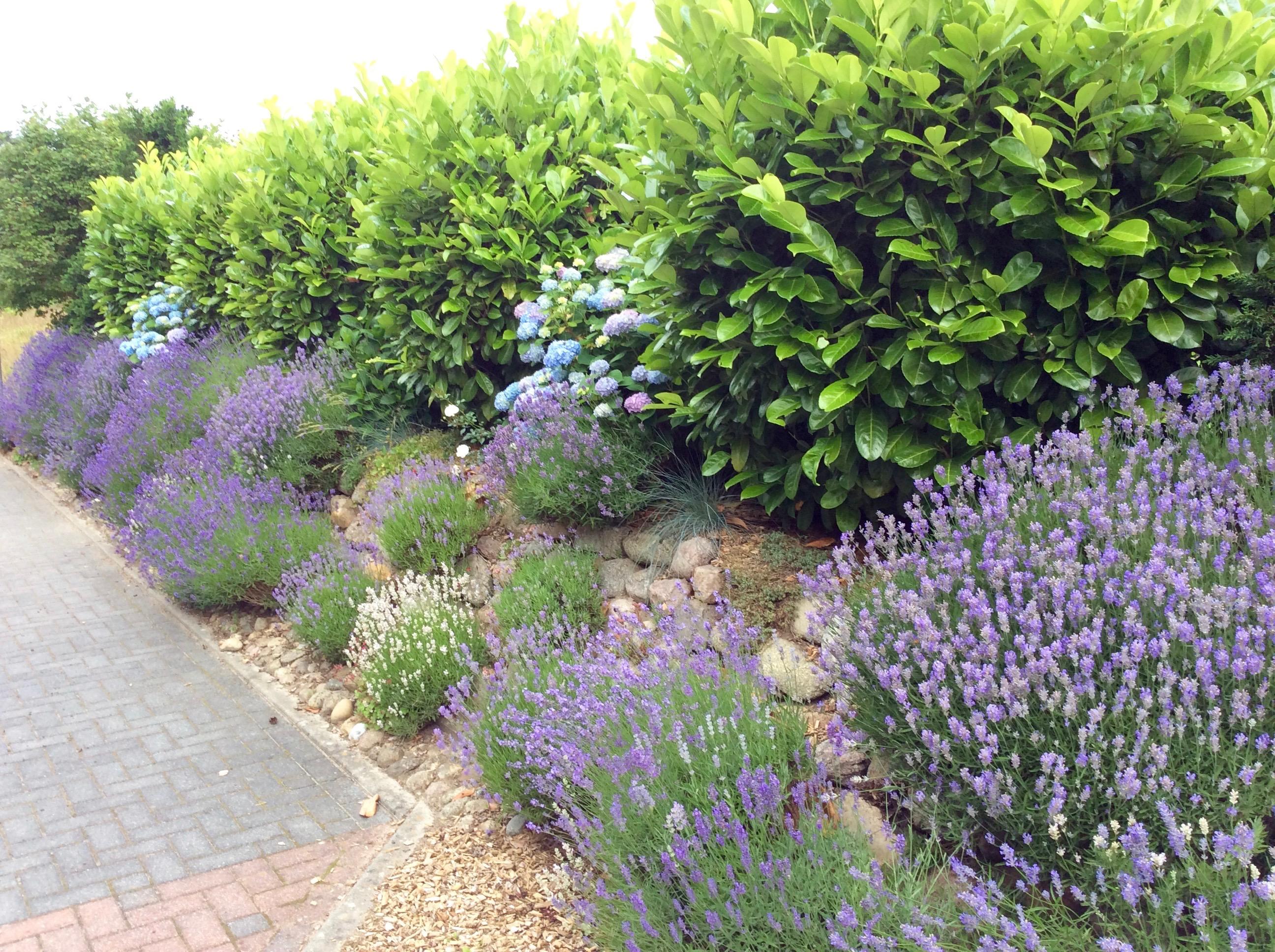 Die Schonste Hecke Fur Deinen Garten 10 Tolle Vorschlage