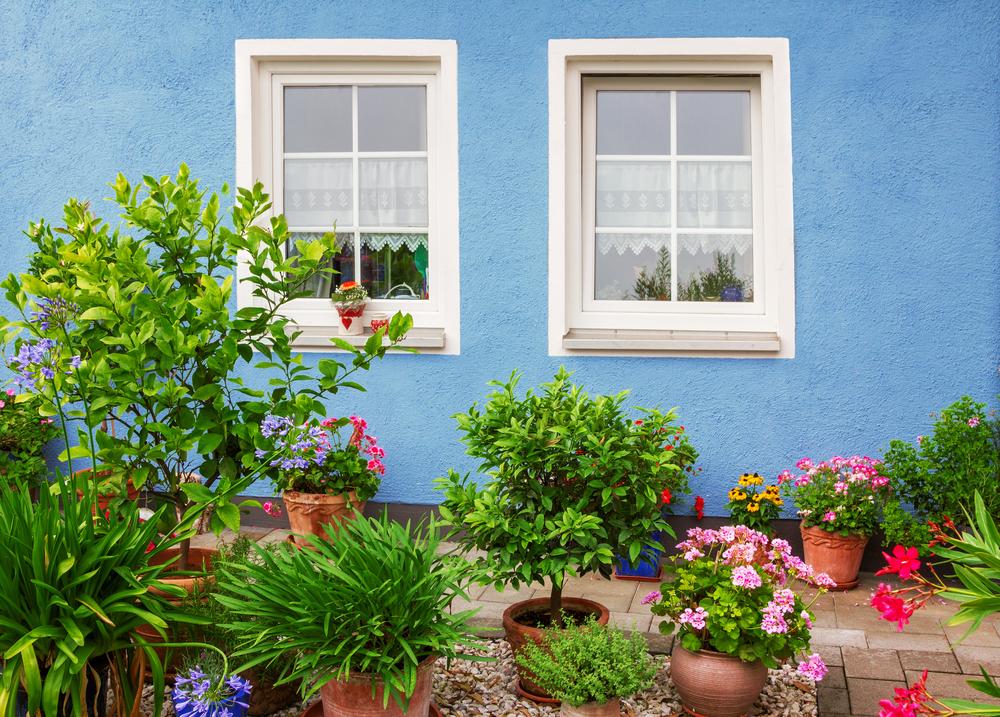 5 pflegetipps f r deine pflanzen im winterquartier. Black Bedroom Furniture Sets. Home Design Ideas