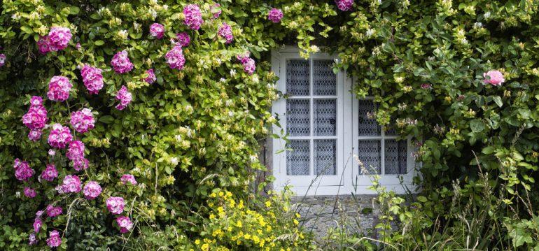 Gartenplanung - Wandbegrünung - Kletterrosen - England - Franks kleiner Garten