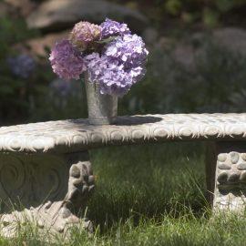 Hortensie - Endless Summer - Franks kleiner Garten