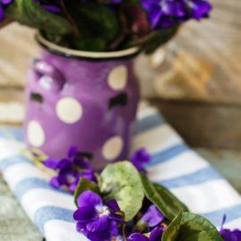 Hornveilchen - Tischdecke - Frühling - Vase - Franks kleiner Garten