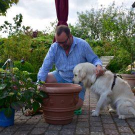 Hortensie - Endless Summer – Bruno - Franks kleiner Garten