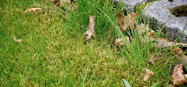 Wie Bekomme Ich Moos Aus Meinem Rasen