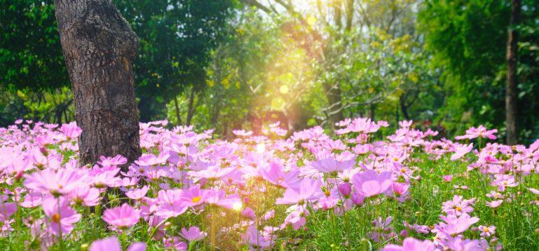 Blumen – iPhoto-Thailand - frankskleinergarten