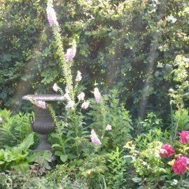 Vogelgarten - Hecke - frankskleinergarten.de