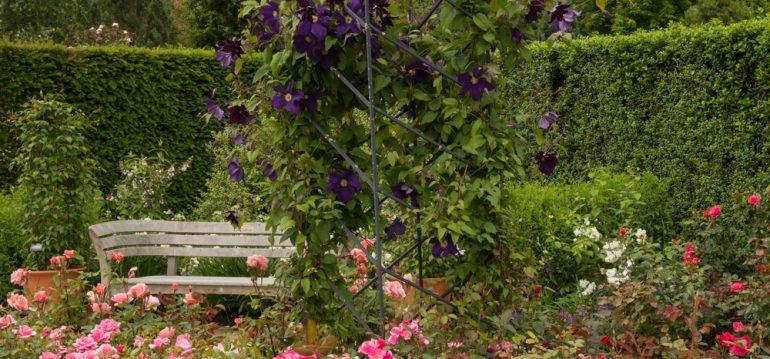 Rosen - Klematis - Franks kleiner Garten