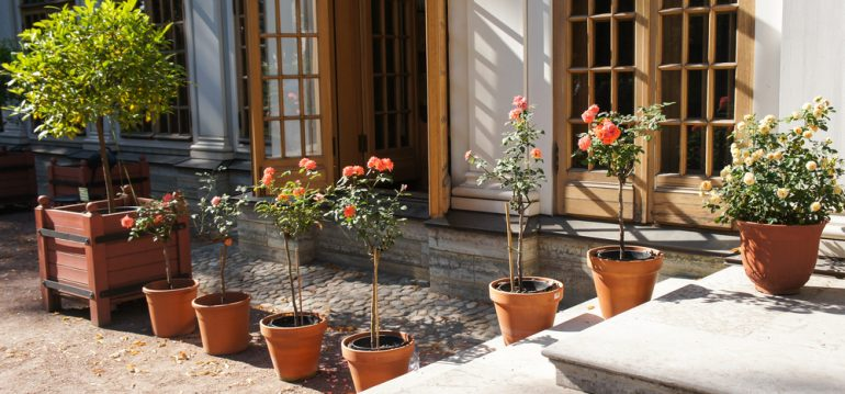Rosen - Terrasse - frankskleinergarten