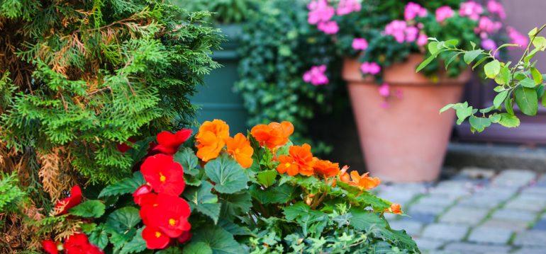 Titel - Juni - Franks kleiner Garten