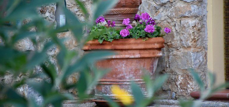 Tontöpfe - Toskana - Franks kleiner Garten