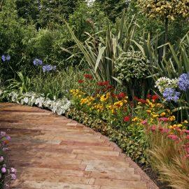 Agapanthus – Garten – Franks kleiner Garten