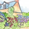 Juni - Illustration - Franks kleiner Garten