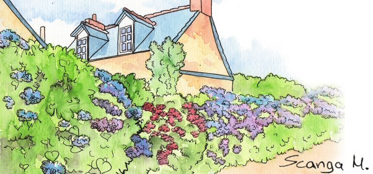 Juni - Illustration - Franks kleiner Garten