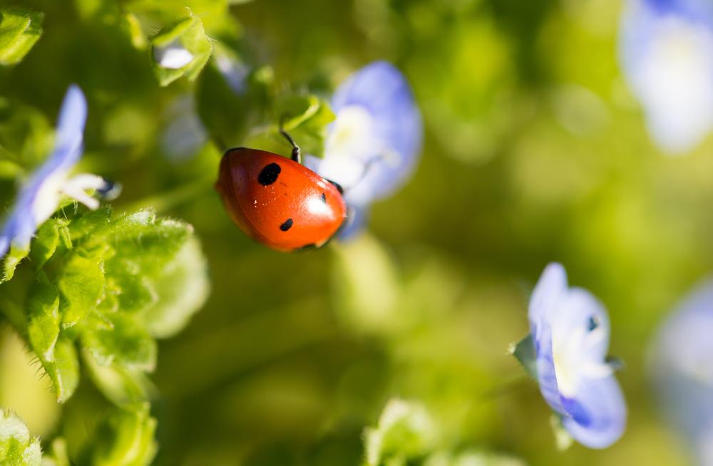 Marienkäfer Blume Franks Kleiner Garten Willkommen In Franks