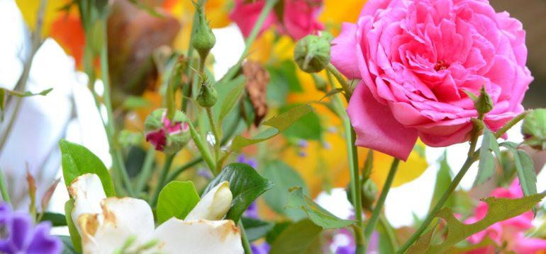 Rosen - Juni - frankskleinergarten