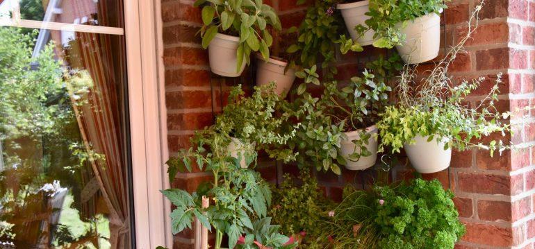 Vertikales Gärtnern – Terrasse – Franks kleiner Garten