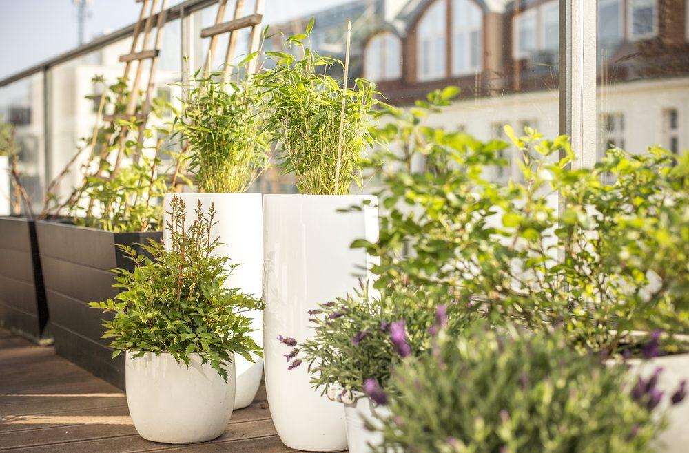 Vertikales Gärtnern - Balkon - franks kleiner Garten
