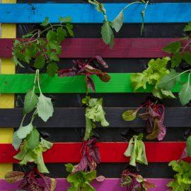 Vertikales Gärtnern - palette - frankskleinrgarten