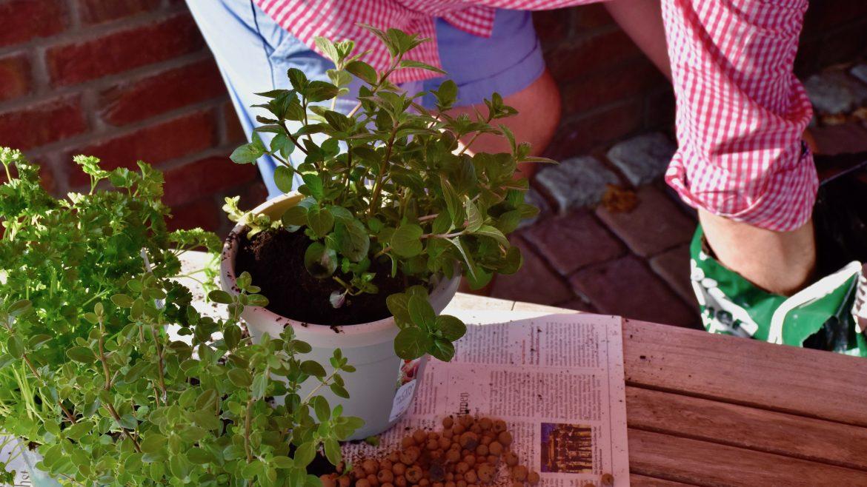 Vertikales Gärtnern - Kräuter 3 - Franks kleiner Garten