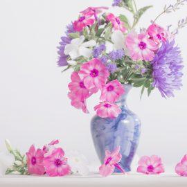 Phlox - Vase - Franks kleiner Garten