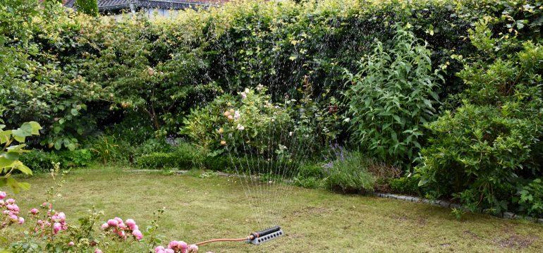Rasen-Waessern-Franks kleiner Garten