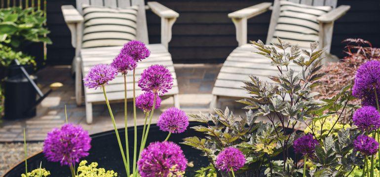 Allium - Terrasse - Franks kleiner Garten
