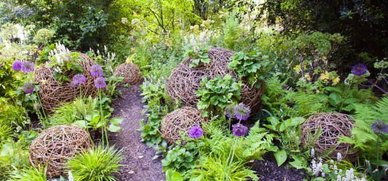 Stauden - Allium - Beet - Franks kleiner Garten