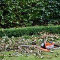 Hecke - Buchs und Rotbuche - Franks kleiner Garten