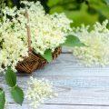 Holunder - Pflanzen die mehr können - Franks kleiner Garten
