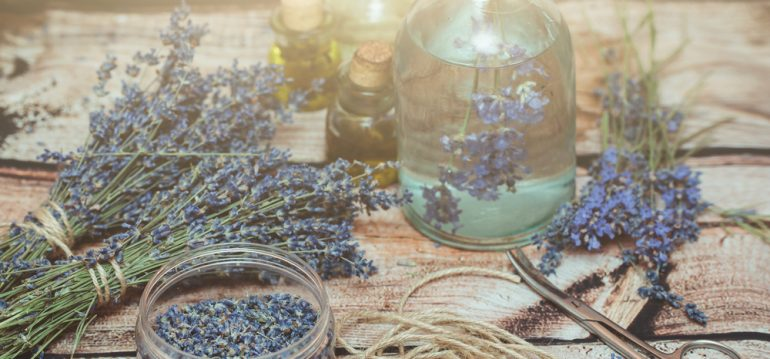 Lavendel- August - Franks kleiner Garten