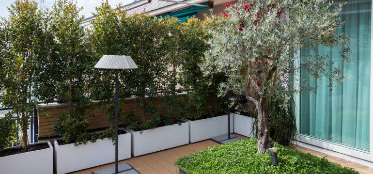 Olivenbaum - Terrasse - Franks kleiner Garten