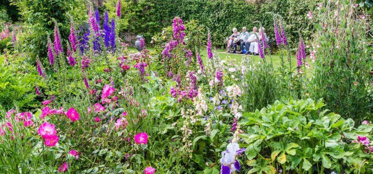 Rittersporn - Beet - Franks kleiner Garten