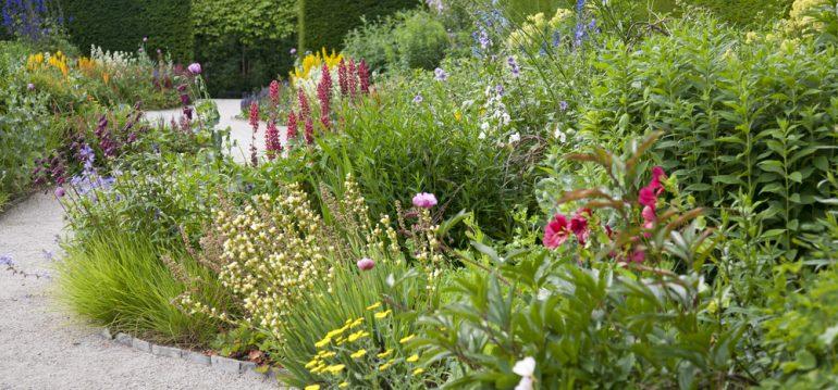 Stauden - Beet – Franks kleiner Garten